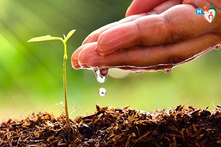 Immagine di una mano che versa dell'acqua sua un germoglio