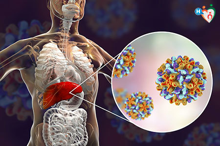 Immagine del virus dell'epatite B del fegato
