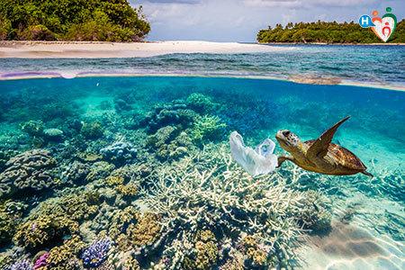 Immagine di una tartaruga che nuota nell'acqua vicino a un sacchetto di plastica