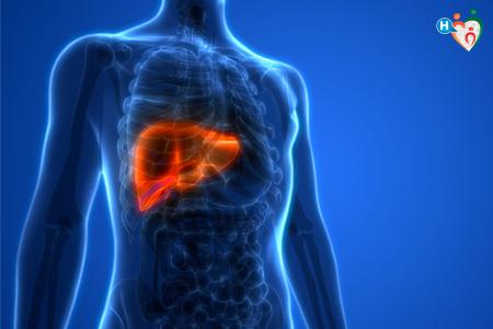 Immagine che ritrae un torace con fegato evidenziato