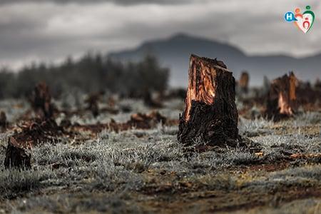 Immagine che ritrae una foresta bruciata