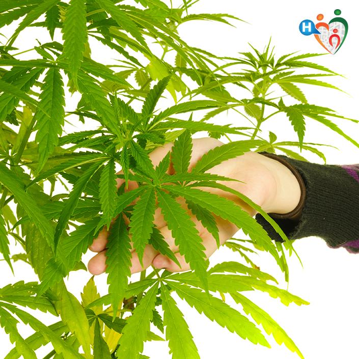 cannabis e salute della prostata