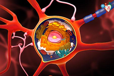 Riproduzione 3D di cellula