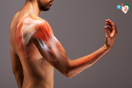 Immagine che ritrae i muscoli in trasparenza di un braccio