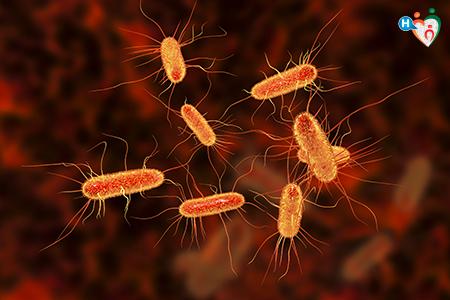 Immagine che ritrae E. coli