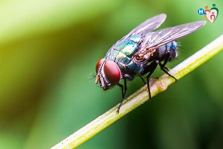 Foto che raffigura una mosca