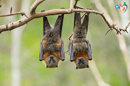 Immagine che ritrae due pipistrelli appesi a un ramo