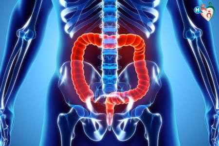 Immagine che ritrae intestino umano
