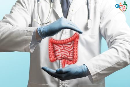 Immagine che ritrae modello di intestino