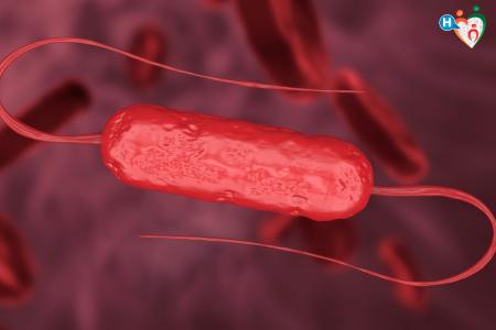 Immagine che raffigura un batterio listeria