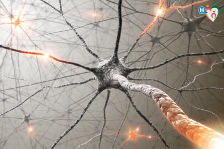 Immagine che raffigura neuroni al microscopio