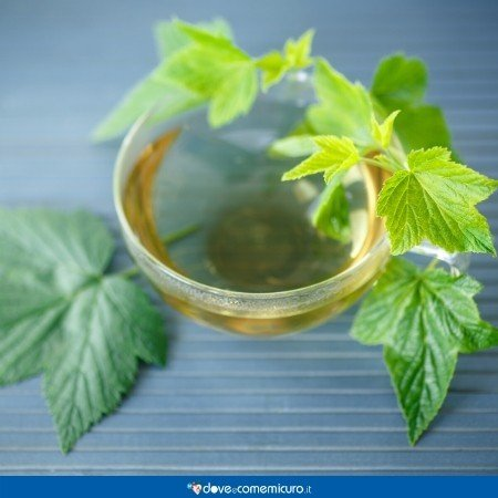 Immagine che raffigura un infuso di foglie di ribes nigrum