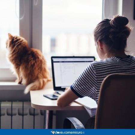 Immagine di un ragazzo chiuso in casa a lavorare al pc con un gatto seduto vicino