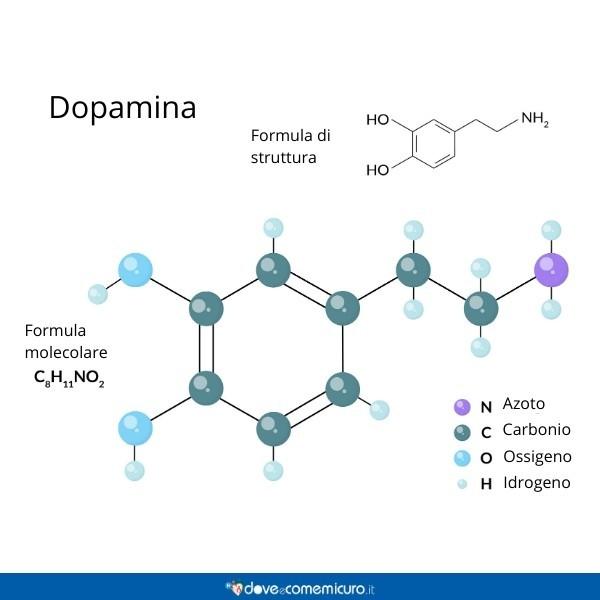 Immagine che mostra la formula molecolare e la formula di struttura della dopamina