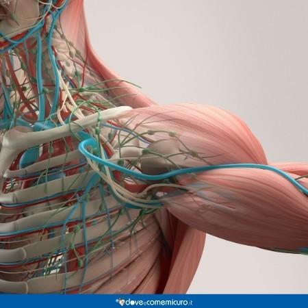 Immagine che ritrae la sezione muscolare e tissutale del collo e delle spalle
