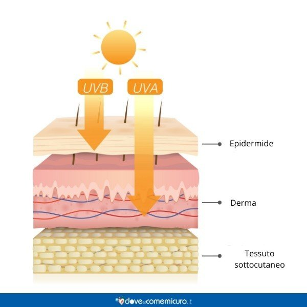 Immagine che ritrae la penetrazione dei raggi UVA e UVB nella pelle
