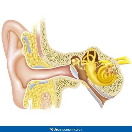 Immagine che mostra l'anatomia dell'orecchio