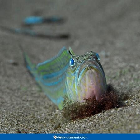 Immagine che mostra una tracina sulla sabbia