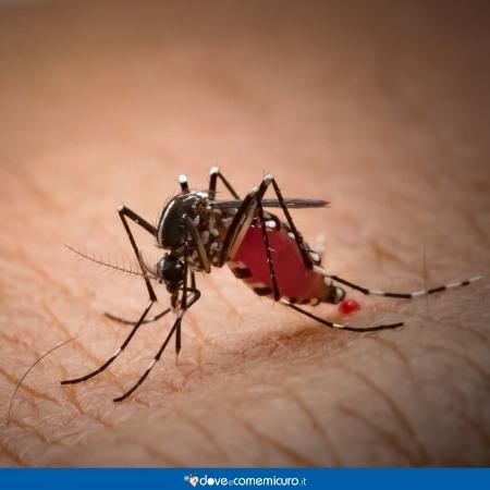 Immagine che mostra una zanzara tigre su un braccio umano