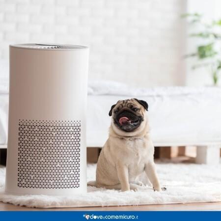Immagine che mostra un purificatore d'aria in una stanza accanto a un carlino
