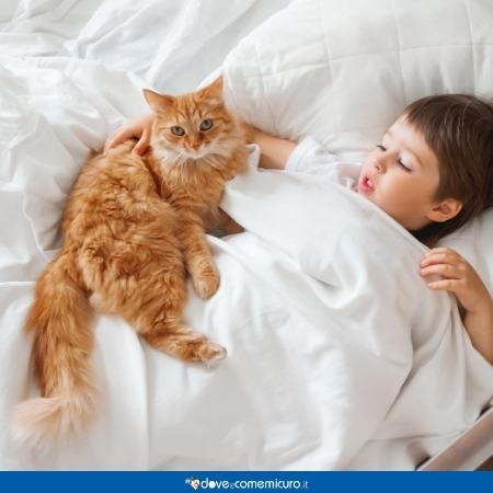 Immagine che mostra un gatto sul piumone vicino a un bambino