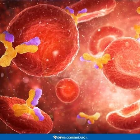 Immagine che mostra le immunoglobuline IgE nel sangue al microscopio