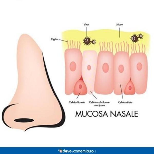 Immagine che mostra la produzione di muco nel naso e la mucosa nasale