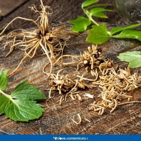 Immagine che mostra la radice della valeriana
