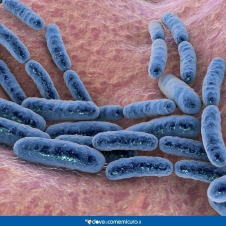 Immagine che mostra lattobacilli della flora batterica