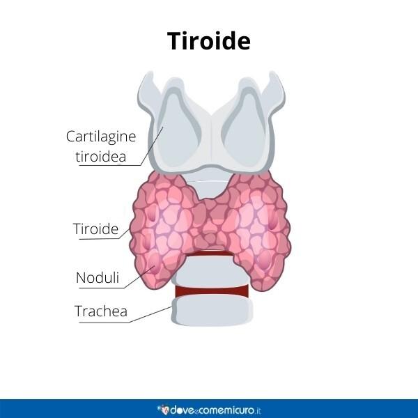 Immgine infografica che rappresenta la tiroide nello specifico