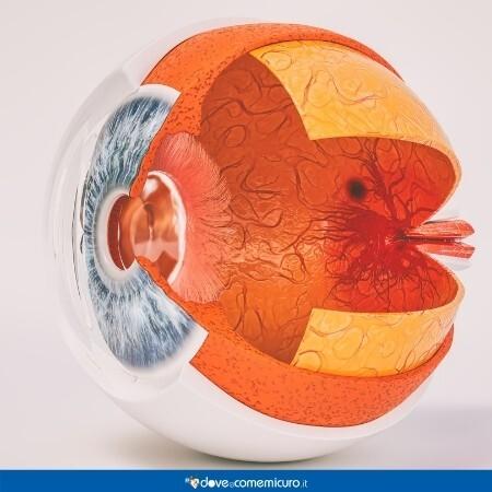Immagine che rappresenta l'anatomia interna ed esterna dell'occhio umano