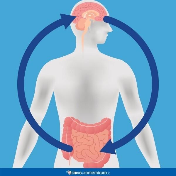 Immagine infografica che rappresenta l'apparato digerente umano collegato al cervello: il sistema nervoso enterico