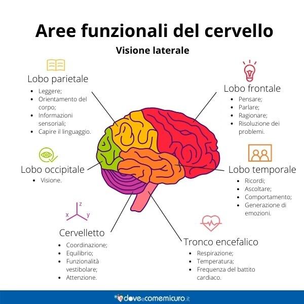 Immagine infografica che rappresenta le aree funzionali del cervello umano