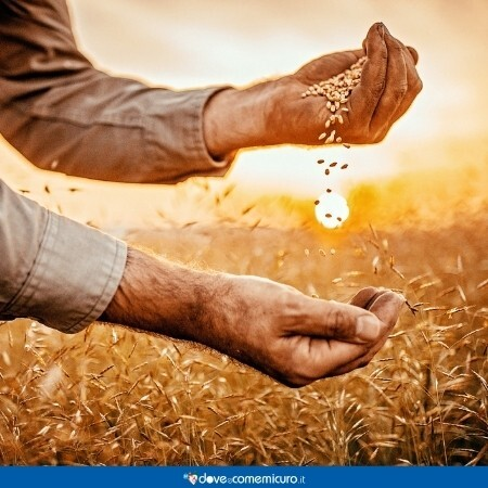 Immagine di un uomo che raccoglie del grano in un campo al tramonto