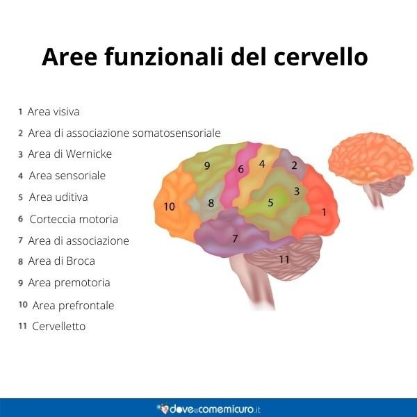 Immagine infografica che rappresenta le aree funzionali del cervello