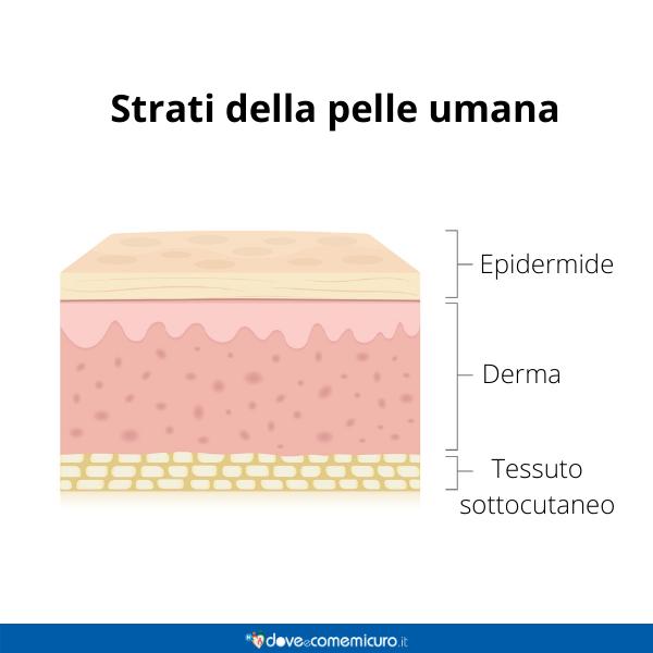 Immagine infografica che rappresenta gli strati della pelle umana