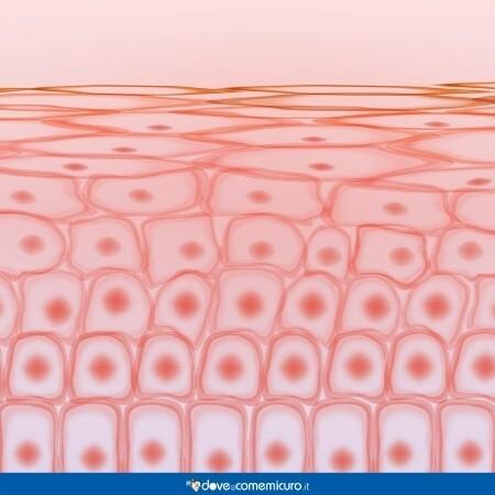 Immagine che rappresenta le cellule della pelle