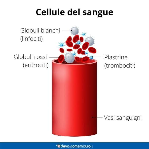 Immagine infografica che rappresenta le cellule del sangue