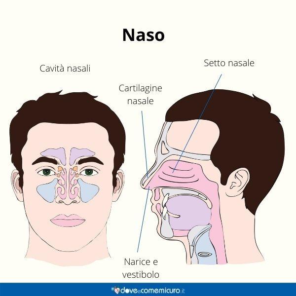Immagine infografica che rappresenta la struttura del naso