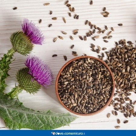 Immagine che rappresenta semi dei fiori di Silybum Marianum o cardo Mariano
