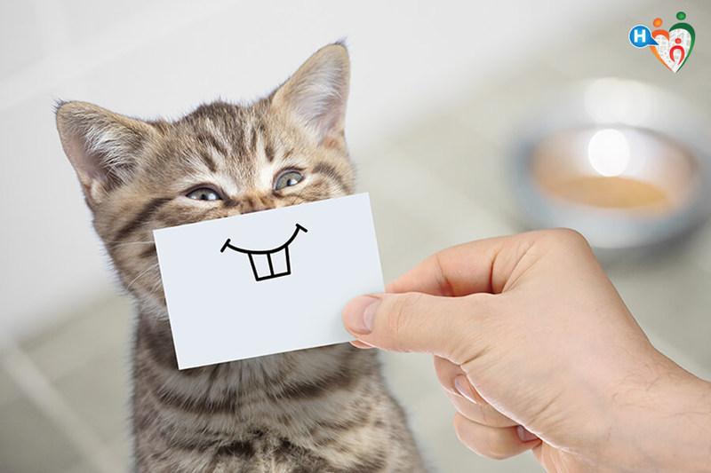 10 Benefici Nellavere Un Gatto Ecco Perchè Fa Bene Alla Salute