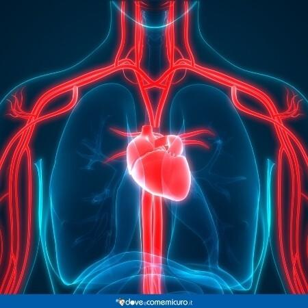 Immagine che rappresenta un corpo umano con vene e cuore