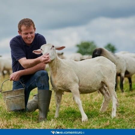 Immagine che rappresenta un uomo vicino ad una pecora