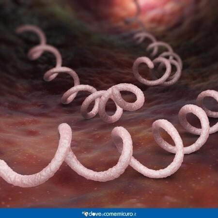 Immagine che rappresenta i batteri di sifilide