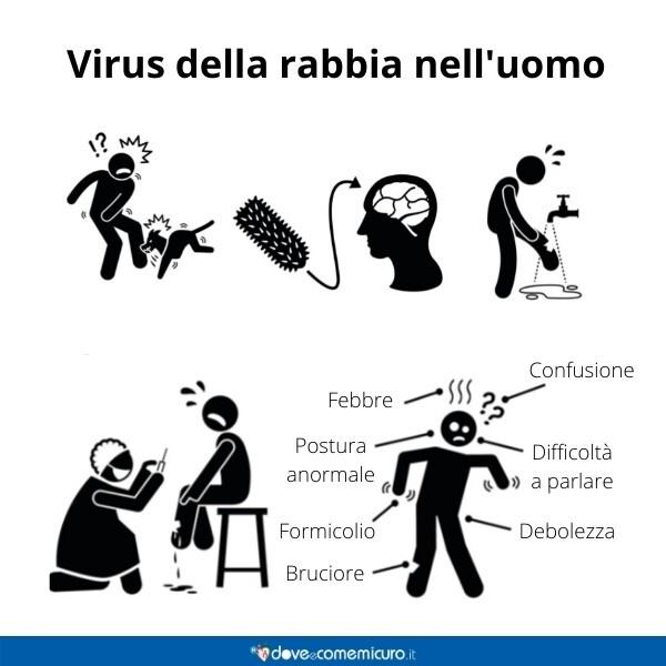 Immagine infografica che rappresenta il virus della rabbia
