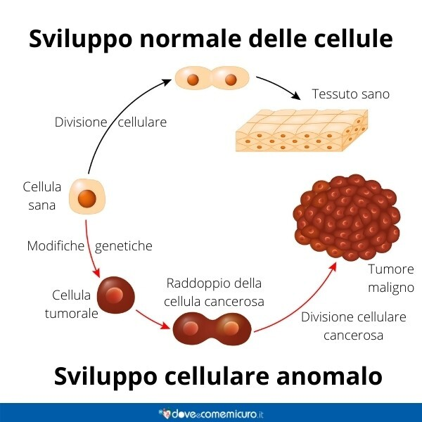 Immagine infografica che rappresenta come si sviluppano le cellule tumorali