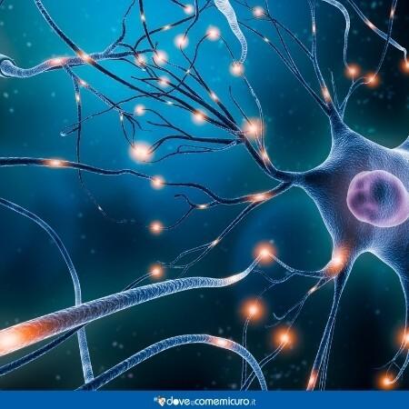Immagine che rappresenta un neurone del sistema nervoso