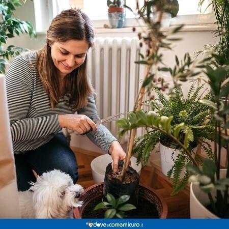 Immagine che rappresenta una donna che cura le piante in casa