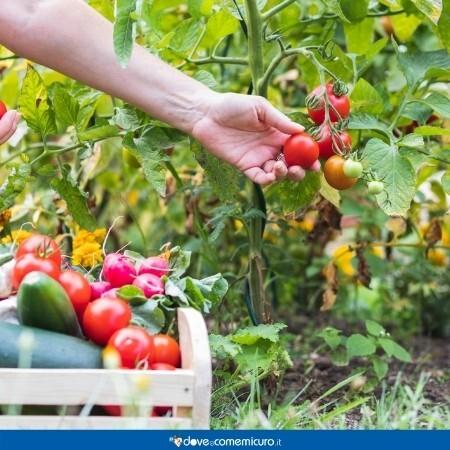 Immagine che rappresenta una persona che cura l'orto