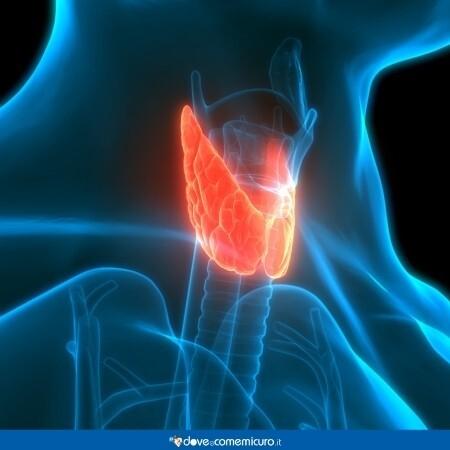 Immagine che rappresenta la tiroide